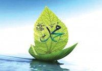 Почему плакал Посланник Аллаха (мир ему)?