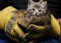 Житель Сочи стал супергероем для кошки (ВИДЕО)