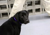ЦРУ уволило щенка по кличке Лулу