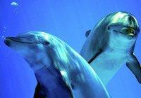 Ученые выявили «поразительное сходство» людей и дельфинов