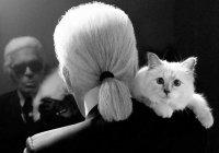 Кошка Лагерфельда презентовала набор для хорошего сна