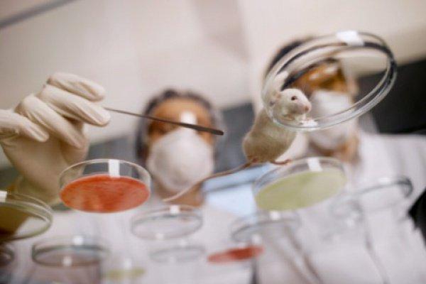 Ученые обнаружили, где находятся клетки, которые инициируют развитие меланомы