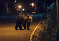 В Калифорнии дикий медведь устроил шоппинг