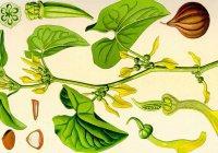 Традиционная китайская медицина вызывает рак