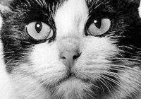 Единственной космической кошке хотят поставить памятник