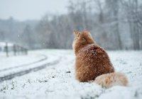 В Гидрометцентре сообщили, какой зимы ждать россиянам