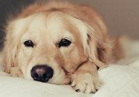 Ученые доказали, что собаки способны чуять рак