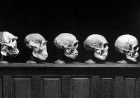 Ученые США опровергли теорию эволюции
