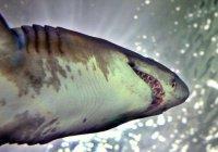 Британец проплыл 7 километров, спасаясь от акулы