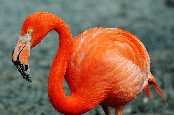 Пользователи социальной сети смогут круглосуточно наблюдать за жизнью гиббонов, орангутангов и фламинго
