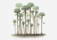 В Китае обнаружили гигантские деревья-грибы