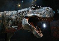 Ученые узнали, для чего тираннозаврам передние лапки