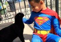 5-летний супергерой из Филадельфии укрощает бродячих котов