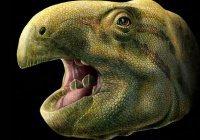 Динозавр-вегетарианец самостоятельно точил свои зубы