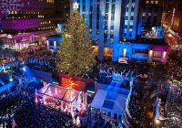 Главную новогоднюю елку выбрали в США