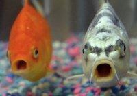 Ученые доказали, что у рыб есть эмоции