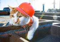 Вакансия кота-прораба появилась в Ярославле