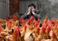 Новый штамм птичьего гриппа угрожает человеку