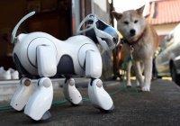 Sony представила домашнего робота-собаку