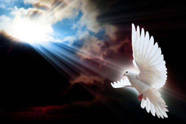 """""""В одном риваяте от шейха Саида говорится, что луч света Посланника Аллаха (с.г.в.) был сотворен в виде белой птицы"""""""