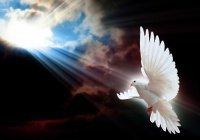 Луч света Пророка (мир ему) был сотворен в виде белой птицы...