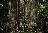 В Бразилии нашли семью, пропавшую после атаки пиратов