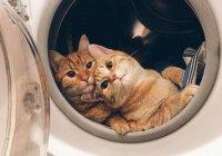 В Австралии кошка выжила после стирки