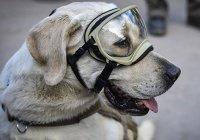 В Мексике на самолете нарисовали собаку-спасателя (ФОТО)