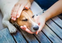 В США пес научился симулировать болезнь