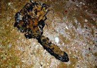 В Севастополе на берегу моря нашли нечто с щупальцами