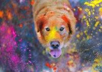 Ученые из Италии выявили цвета, которые не видят собаки