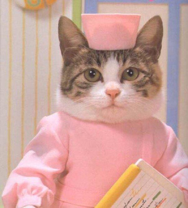 Но точно ответить на вопрос, как именно связаны кошки и гены человека, пока невозможно
