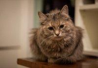 Полиция Японии подозревает кошку в убийстве пенсионерки
