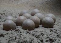 В Сибири впервые нашли яйцо динозавра