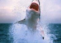 В Калифорнии Apple Watch спасли серфингиста от акул