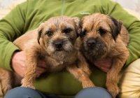 В Великобритании 2 собаки спасли семью из пожара