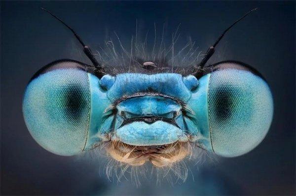 Новый глаз появился прямо между пары обычных глаз насекомых
