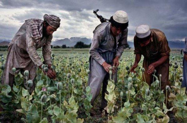 Производство опиума вАфганистане загод выросло на87%