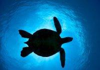 NASA показало, как умирает жизнь в океане (ВИДЕО)