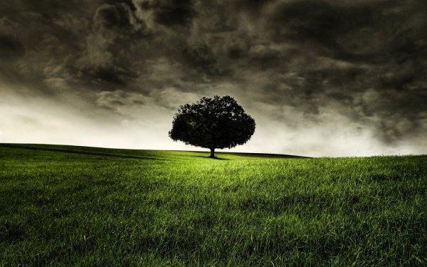 """""""Шайтан узнал о запрете Аллаха не подходить близко к одному дереву"""""""