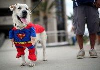 Ученые выявили влияние собак на здоровье человека