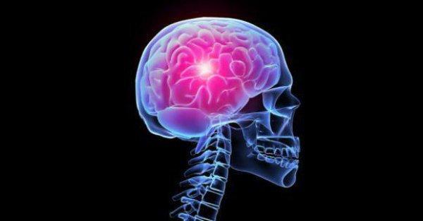 Уникальное программное решение с открытым исходным кодом позволит ученым изучать не только строение мозга, но и внутренние биохимические процессы