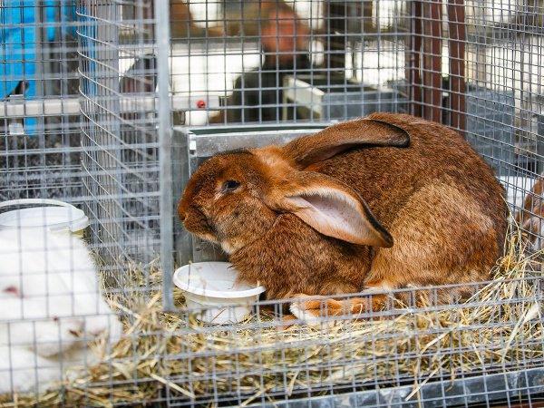 Несколько кроликов погибли, оставшихся расселили по ветеринарным приютам