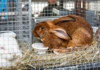 Кроличью ферму обнаружили в однокомнатной квартире в Дании