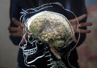 Разгадана причина старения мозга