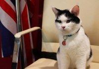 В Иордании на госслужбу взяли кота (Фото)