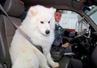 Енот и собака призвали Россию к безопасности