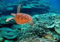Ученые пересадят кораллы на Большой Барьерный риф