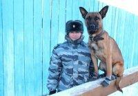 Клонированные овчарки будут служить в Якутии