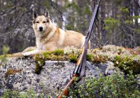 В США собака застрелила своего хозяина